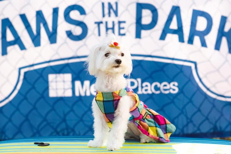 Paws-In-The-Park-Bailey